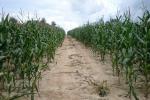 Rynek zbóż w kraju (19.05.2019)