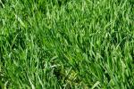 Przecena większości kontraktów na zboża i nasiona oleiste