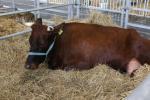 Ceny żywca wołowego, wieprzowego i drobiowego (12.05.2019)