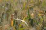 Rynek zbóż w kraju (24.11.2019)