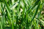 Rynek zbóż w kraju (18.07.2021)