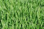 Ceny zbóż na giełdach towarowych (16.06.2019)