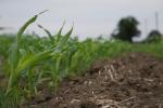 Ceny zbóż na giełdach towarowych (31.03.2019)