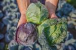 Ceny warzyw i pieczarek w Polsce (16.08.2016)