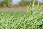 Ceny zbóż na giełdach towarowych (18.07.2021)