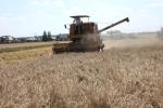 Rynek zbóż w kraju i na świecie (14.08.2016)