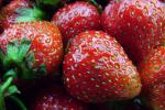 Zbiory owoców z krzewów owocowych w sadach i plantacji jagodowych