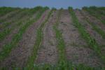 Rynek zbóż w kraju (14.02.2021)