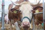 Rynek mięsa w Polsce (19.05.2019)