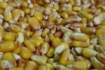 Ceny zbóż na giełdach towarowych (17.02.2019)