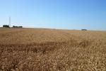 Ceny zbóż na giełdach towarowych (02.12.2018)