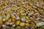 Rynek zbóż w kraju (7.10.2018)