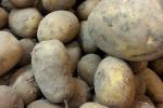 Spadek cen ziemniaków na rynku krajowym