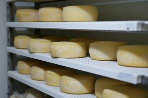 Ceny detaliczne produktów mleczarskich mniejsze niż przed rokiem