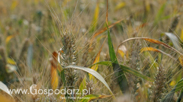 Rynek zbóż w kraju (23.02.2020)