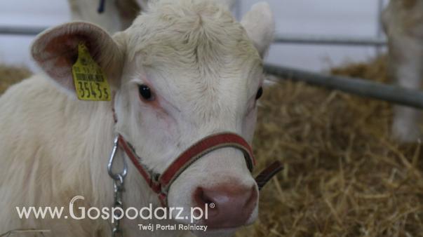 Rynek mięsa w Polsce (28.07.2019)