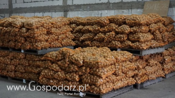 Ceny ziemniaków w Polsce (25.04.2021)
