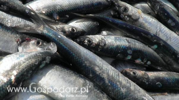 Ceny detaliczne ryb i owoców morza