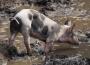 Rynek mięsa w Polsce (25.02.2018)