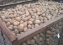 Do końca sezonu europejski rynek ziemniaków będzie pod presją popytu