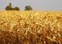 Susza rolnicza notowana w całym kraju