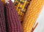 Ceny zbóż na giełdach towarowych (16.10.2016)