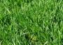 Presja żniw obniża notowania pszenicy po obu stronach Atlantyku