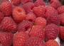 Produkcja malin w Polsce na tle rynku globalnego