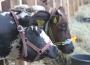 Ceny bydła na targowiskach (02.02.2018)