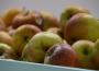 Uwaga podmioty skupujące owoce!