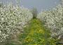 Ocena przezimowania drzew, krzewów owocowych i plantacji jagodowych