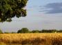 Susza rolnicza obserwowana w 8 województwach