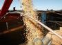W połowie stycznia sytuacja na giełdowym rynku zbóż jest stabilna