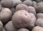 Ceny ziemniaków w Polsce (10.01.2021)