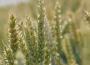 Rynek zbóż w kraju (22.03.2020)