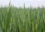 Rynek zbóż w kraju (25.04.2021)