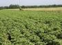 Światowa produkcja rolnicza
