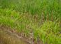 Susza rolnicza pośród zbóż i truskawek
