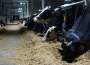 WZ WIR w sprawie dramatycznej sytuacji na rynkach rolnych