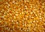 Nowe długoterminowe maksima na giełdowym rynku zbóż