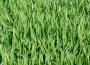 Ceny zbóż na giełdach towarowych (7.07.2019)