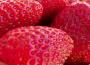 Produkcja owoców z krzewów i plantacji jagodowych