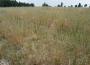 Pomoc dla rolników prowadzących produkcję roślinną