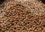 Dobre prognozy FAO dla rynku oleistych w starciu z obawami o plony amerykańskiej soi (6.09.2013)