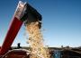 Spekulacje na rynku zbóż. Konieczne są konkretne działania w ramach kolejnej WPR