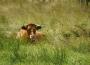 Ceny żywca wołowego, wieprzowego i drobiowego (17.05.2020)