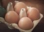 Ceny jaj spożywczych w Polsce (12.09.2021)