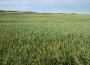 Soja straciła ponad 5%, a kukurydza prawie 4%