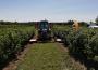 Ekologiczna uprawa warzyw i owoców. Czy to się opłaca?