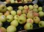 Informacja dla plantatorów i punktów skupu owoców i warzyw